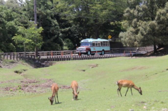 奈良県・東大寺へのアクセス・行き方バスで「市営バス・高速バス(夜行バス)で東大寺」まで