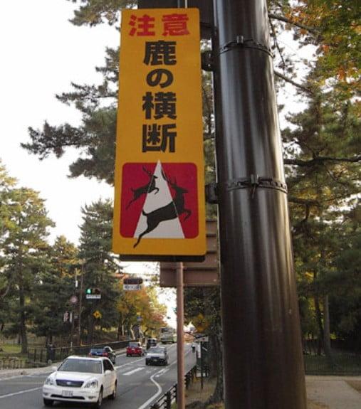 奈良公園の鹿のトラブル(事故)「交通事故にあったらどうなるの?」