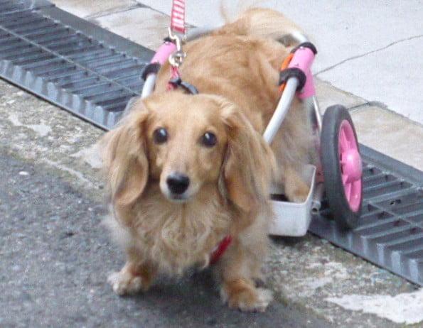 奈良県・東大寺ミュージアムに車椅子やペット連れで入場できる?写真撮影は可能? (2)
